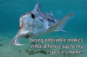 ghost shark, australian ghost shark, ghost shark meme, funny shark meme