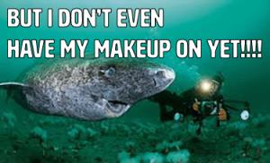 greenland shark, funny greenland shark, shark  meme