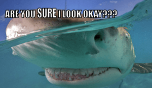 lemon shark, lemon shark meme, funny shark pictures