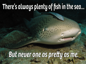 leopard shark, funny sharks, cute leopard shark