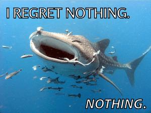 whale shark, whale shark feeding, funny shark meme