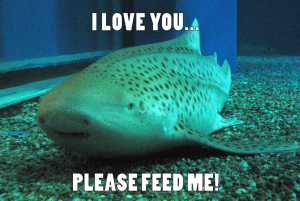 zebra shark, funny shark, smiling sharks, shark memes